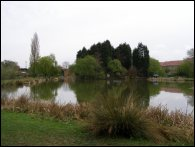 The Delves Island Pond