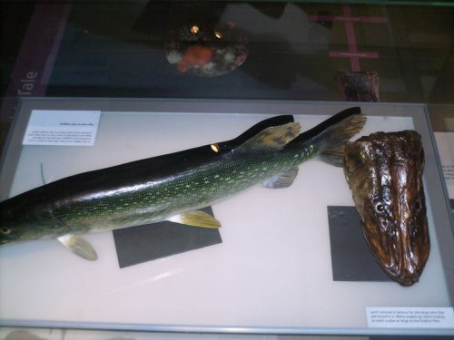 Endrick Pike Glasgow Kelvingrove Museum and Art Gallery