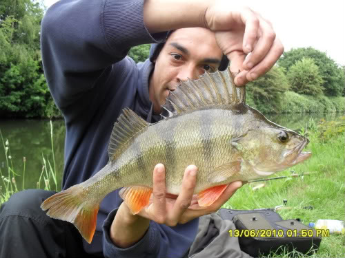 Patch 2lb 6oz perch