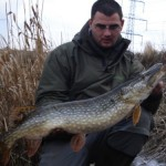 Deadbait 14lb pike