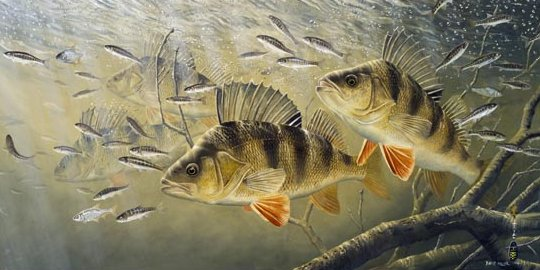 Swagger of Perch by David Miller