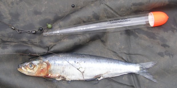 Sardine rig